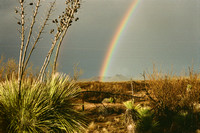 141. New Mexico Rainbow,  Horizontal